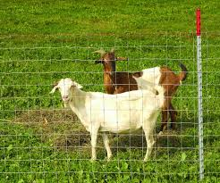 Keystone Steel Wire 70315 Sheep Goat Fencing Class 1 48 In X 330 Ft Agricultural Fence Amazon Co Uk Kitchen Home