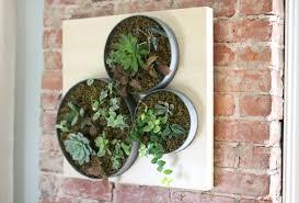 diy vertical succulent garden ehow s