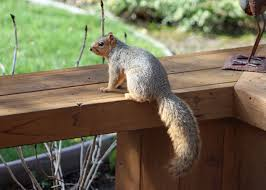 Dang Squirrels Are Eating The Expensive Aluminum Fence