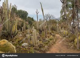 cactus garden in the city holon israel