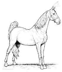 Kleurplaat Dieren Paarden Kleurplaat Paard
