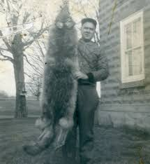 Trapper Roy Johnson posing with a red coyote pelt in Morristown  