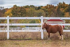 Yeeleyeele Autumn Red Barn Backdrop 10x8ft Brown Pony With Stands Next To White Picket Fence Photography Backgrounds Fall Event Party Decor Countryside Kid Adult Portrait Photoshoot Studio Booth Props Dailymail
