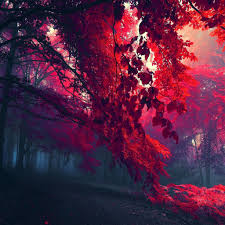 Red Forest Ipad Air Wallpapers Free Download