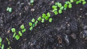 beginner gardening soil wonder garden