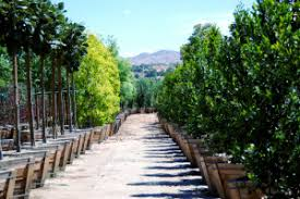 paradise garden center riverside your