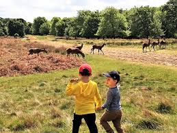 deers at the Richmond park ...