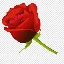 وردة زهرة الرسم وردة Floribunda خلفية للكمبيوتر Png