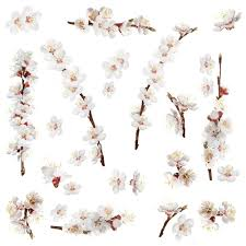 Shop Dogwood Branch Peel And Stick Wall Decals 26 Pieces Wall Vinyl Overstock 18216316