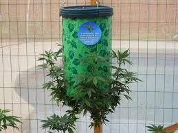 topsy turvy a good way to grow cans