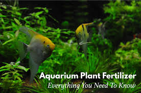 6 best aquarium plant fertilizers for