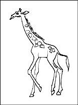 Giraffe Kleurplaat Gratis Kleurplaten