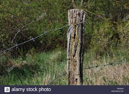 Fence Post With Barbed Wire Fencing On A Green Background Stock Photo Alamy