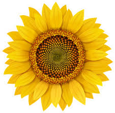 Sunflower Car Stickers Custom Decals