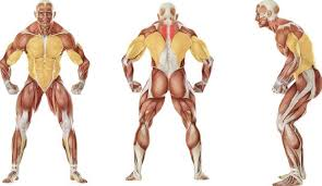 top 5 back exercises for men s health