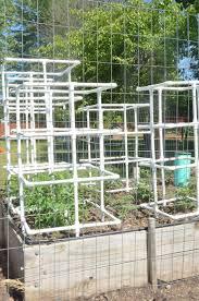 Easy Diy Tomato Cucumber Squash Pvc Pipe Cage