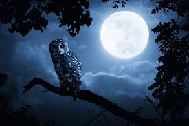 Are You a Night Owl Or an Early Bird? | Morgan McKinley Recruitment