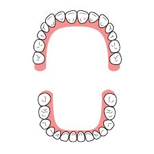 「フリーイラスト 歯」の画像検索結果