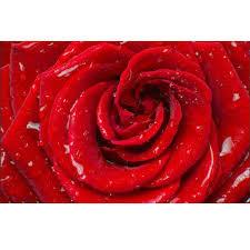 pvc rose flower printed wallpaper size