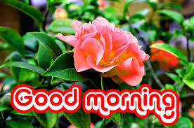 nice good morning pictures good