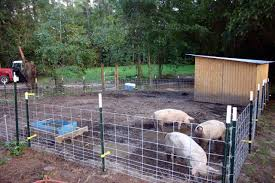 We Used 8 Hog Panels T Posts An Electric Fence A Gate And Some Lumber And Tin We Had Laying Around We Spent About 500 Pig Farming Pig Fence Pig Pen