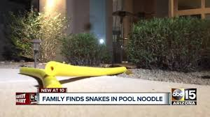 Arizona Family Reports Finding Rattlesnakes Inside Pool Noodle