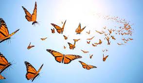 Evolutionary Coaching — International Centre for Conscious Leadership