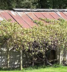 15 Sturdy Grape Vine Trellis Design Ideas For Your Backyard Arbor Nov 2020 Outdoor Happens