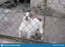 Dog Look At Outside Stock Photo Image Of Animal Closeup 184181748