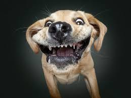 صور كلاب مضحكة رمزيات طريفه جدا للجراء فنجان قهوة