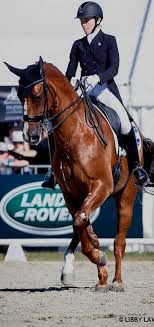 Wendi Williamson (NZL) on Don Amour MH (With images) | Equestrian dressage,  Riding helmets, Riding