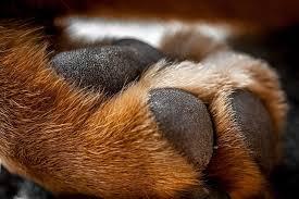 scotts dale dog grooming