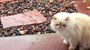 funny cats moments