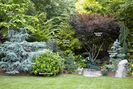 7 ways to use conifers in the garden