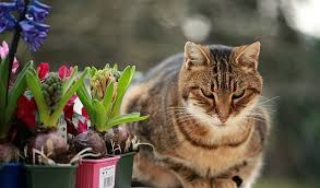 how to stop cats from fouling your garden