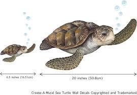 Amazon Com Sea Turtle Wall Decal Ocean Undersea Animal Tortoise Wall Sticker For Kids Room Decor Boys Girls Toddler Baby Nursery Bedroom Playroom Bathroom Vinyl Art Gift Arts Crafts Sewing