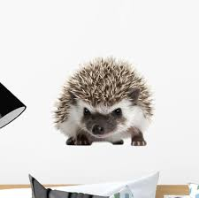 Four Toed Hedgehog Atelerix Albiventris Wall Decal Wallmonkeys Com