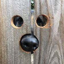 Peekaboo Holes In The Fence For Penny The Peeking Dog