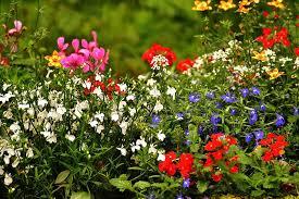 french vs english garden landscaping