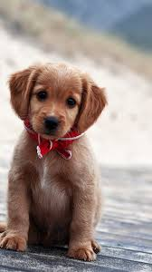 pics of puppies wallpaper android