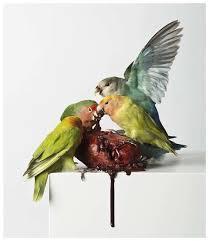 Morbid Taxidermy Art : Polly Morgan