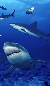 Eu Set To Ban Shark Finning Beautiful Sea Creatures Ocean Animals Ocean Life Photography