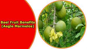 bael fruit benefits in hindi garmiyo