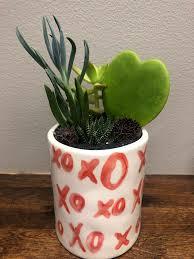 hugs and kisses succulent garden in