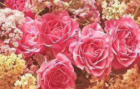 rožės, kilnus rožes, romantiškas, rožinis, gėlė, grožis, meilė ...