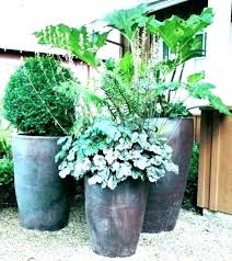 plants for patio pots pusat hobi