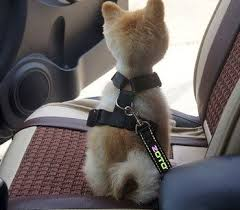 best dog car harness uk top 10 safe