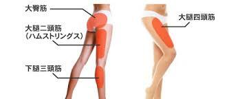下半身痩せで鍛えると効果的な筋肉|太ももダイエットNET