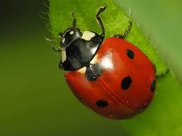 ladybug wallpapers 0 05 mb