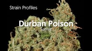 Durban Poison | Marijuana Strain Library | PotGuide.com